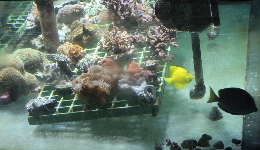 Instalaciones de reproducción de corales en el Zoo Aquarium de Madrid.