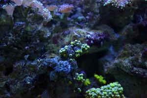 Corales del Zoo Aquarium de Madrid